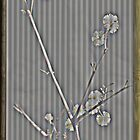 Wattle Flower Card by Deborah McGrath