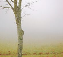 Lone River Birch by ckroeger