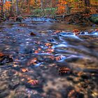 Creek In Autumn Season by Michael Mill