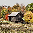 Autumn Magic by billium
