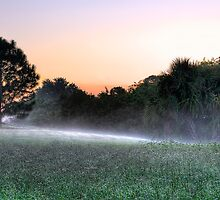Dew in the mist by Gouzelka