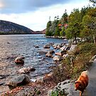 'Jordan Pond Path' by Scott Bricker
