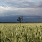 Winter Wheat Crop by Johnso83