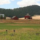 Barns In Red Near Pullman, Washington by JaneLoughney