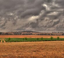 Stormy Vinyard by David Hunt