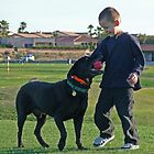 Why We Love Labs by Linda Gregory