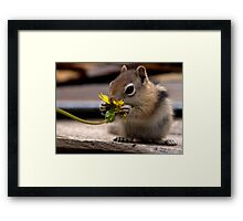 First Dandelion  (1st in a series...) Framed Print