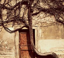 tree and a door by sabrina card
