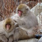 Grooming Snow Monkeys by wilderpisces