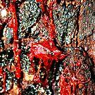Bleeding Bark by bribiedamo
