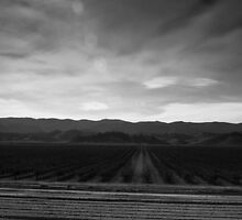 Wine Country, between santa cruz and SLO by Alex Uvalle