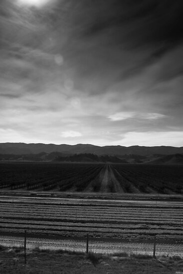 Wine Country, between santa cruz and SLO by Alex Uvalle