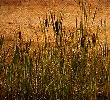 Cattails and Lace by TeresaB