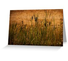 Cattails and Lace Greeting Card
