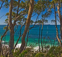 through the trees - jervis bay australia by doug riley