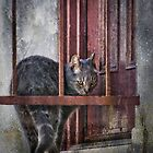 Grunge Cat by Kevin Bergen