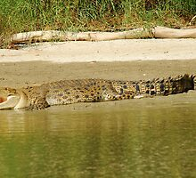 Crocodile on East Alligator River bank by Speedy
