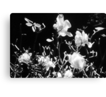 there be magnolias and butterfies in my garden of dreams Canvas Print
