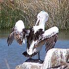 Pelican 2 by timthetraveller