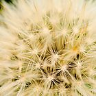 Dandelion by Nicole a Alley