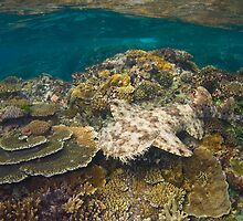 Tasselled Wobbegong - Camouflage on the Reef by gardenofbeeden