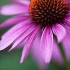 Pink floral beauty by Denise Goldberg