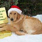Puppy Christmas Wishes by Molly  Kinsey