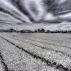Noordwijk Fields by Ward McNeill