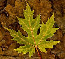 Green Leaf by AJ Airey