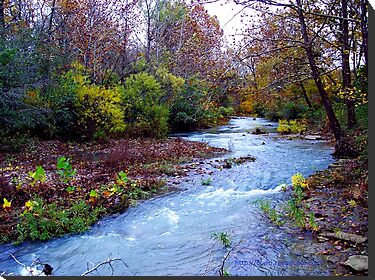 Arkansas Ozark Mountain Stream by NatureGreeting Cards ©ccwri