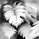 Tree Fern Pencil 1 by Patricia Howitt