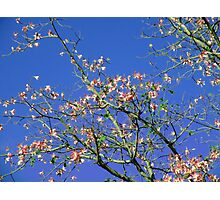 Blooming Tree Photographic Print
