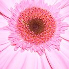 Pink gerbera by PinkDinoDesigns
