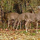 Deer Company in NJ by Monica Engeler