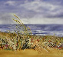 Dune Grass by Paul Riordan