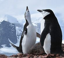 Chinstrap pinguins by Marieseyes