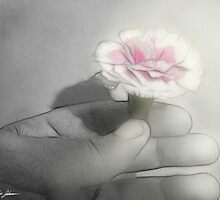 Pink Centered Carnations 2 - Contemplation by Christopher Johnson