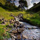Summer Stream by Andrew Leighton
