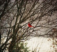 Cardinal in snow by AlanaKirk