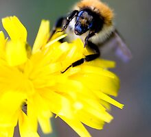 busy bumble bee by rosscaughers