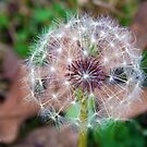 Autumns Dandylion by Tonye Banks