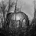 Techno Horse by nikspix