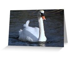 A very fine swan indeed.......... Greeting Card