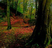 auturm trees by brian a smith