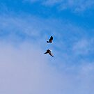 Soar Like Eagles and Never Grow Weary-Conowingo Dam by BigD