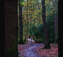 Autumn in the Eccelsall woods by Paul Jones