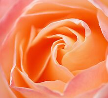 Heart of a rose by Mirka Rueda Rodriguez