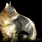Barn Cat in the Sunbeams by Kay Kempton Raade