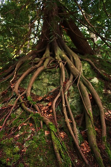 Epic Tree Roots From Another World by buttonovski