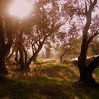 Olive Grove by Hazel Dean